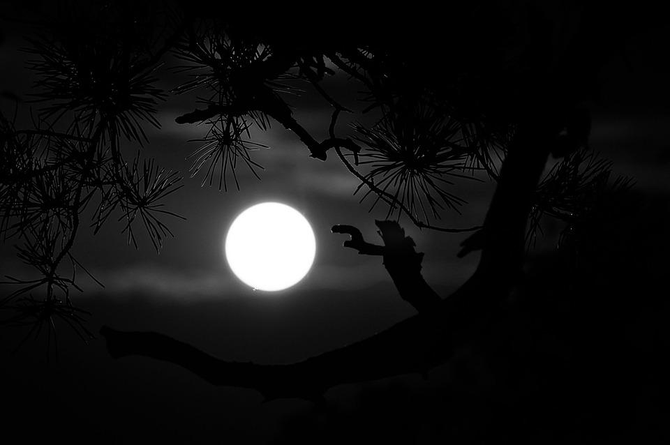 Midnight Black Wolf Painting