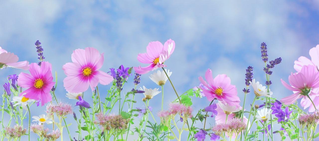 Wild Flowers, Flowers, Plant, Macro, Nature, Pink