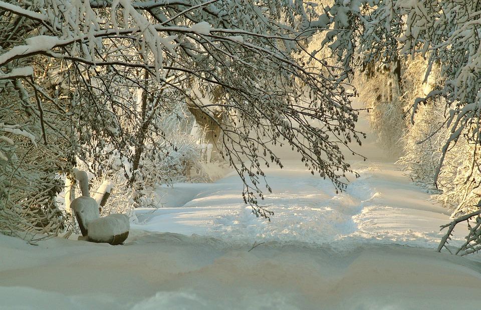 Gratis foto vinter sn tr d sn iga wintry gratis bild p pixabay 572540 - Schneebilder kostenlos ...