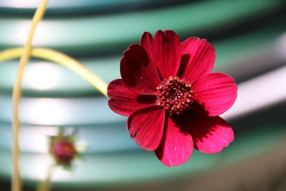 Fleur Au Chocolat Rouge Photo Gratuite Sur Pixabay