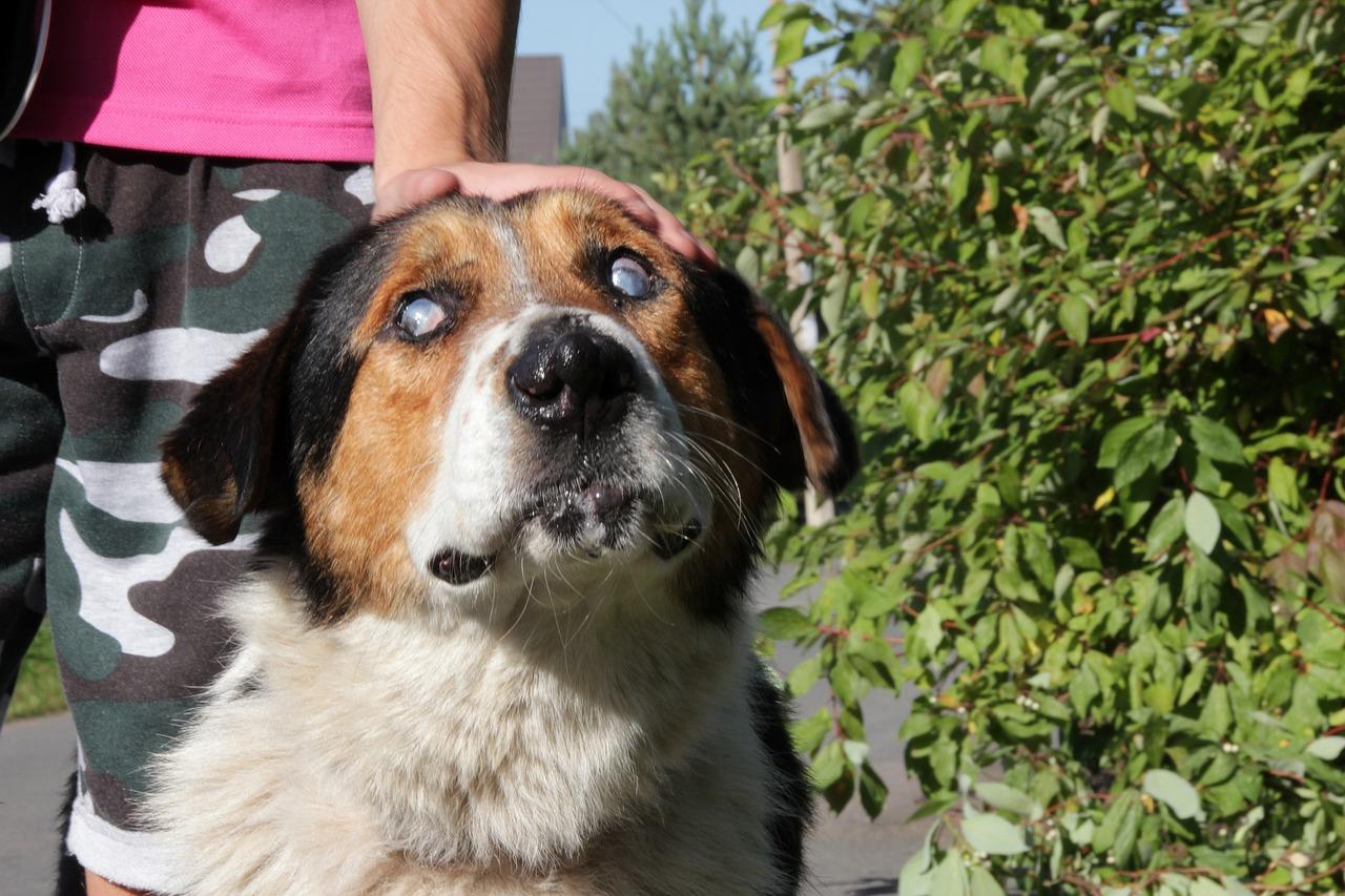популярный слепая собака фото марк отошел
