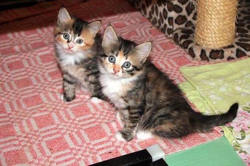Surprise, Cat, Kitten, Pet, Animals