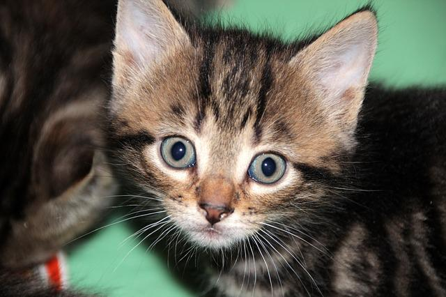 ethernet cat 7
