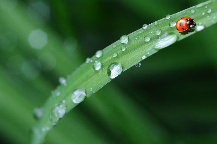 Raindrops, Leaves, Ladybug