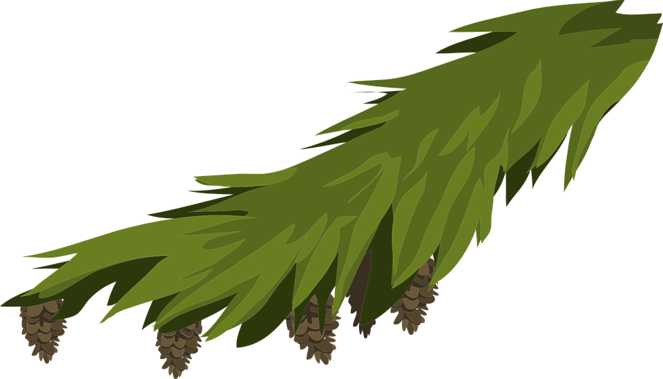 Free Vector Graphic Branch Evergreen Fir Spruce Free