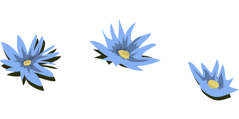 Free Vector Graphic Water Lilies Blue Flowers Free Image On Pixabay 575452