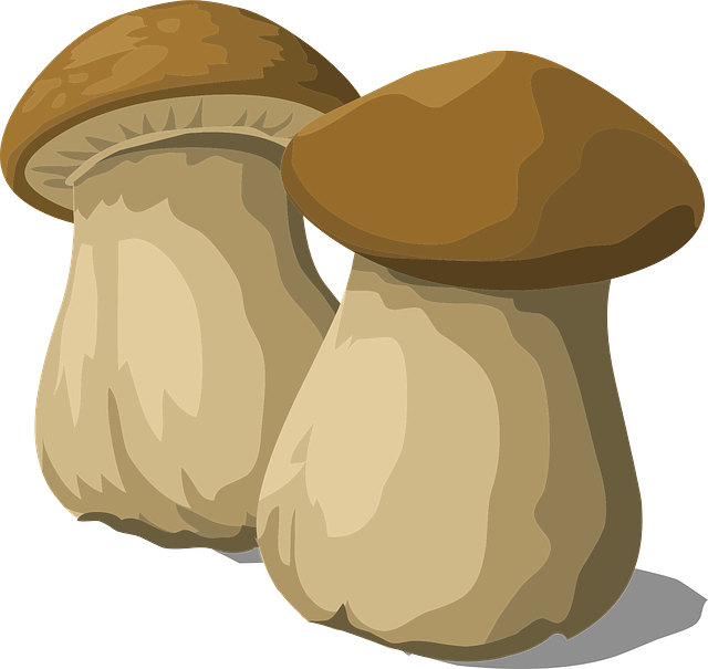 Porcini Mushroom Fungus 183 Free Vector Graphic On Pixabay