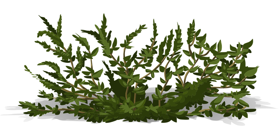 Free vector graphic bush shrub green nature plant - Arbustos con flores ...