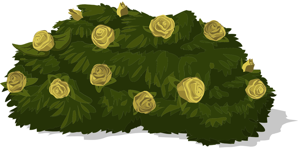 free vector graphic bush roses yellow green free