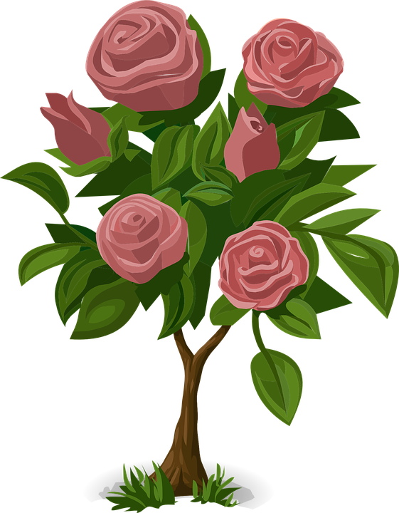 Rose, Pink, Plant, Flower, Love, Romance