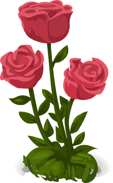 roses pink flowers 183 free vector graphic on pixabay