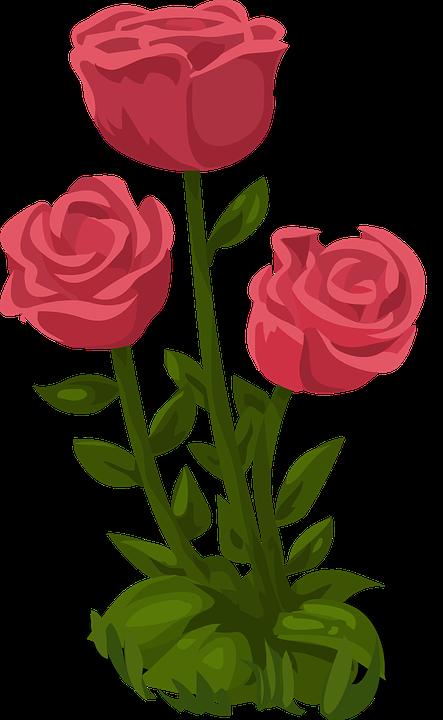 Roses, Rose, Fleurs, Floraux, Nature, Fleur, Romance