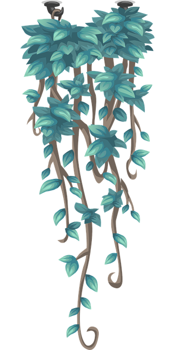 Pflanzen Hängend kriecher hängende pflanzen hängend · kostenlose vektorgrafik auf pixabay
