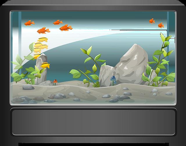 free vector graphic aquarium fish water aquatic free
