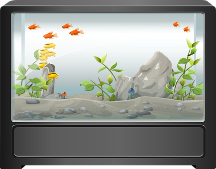 Tips For Electrical Safety In Aquarium