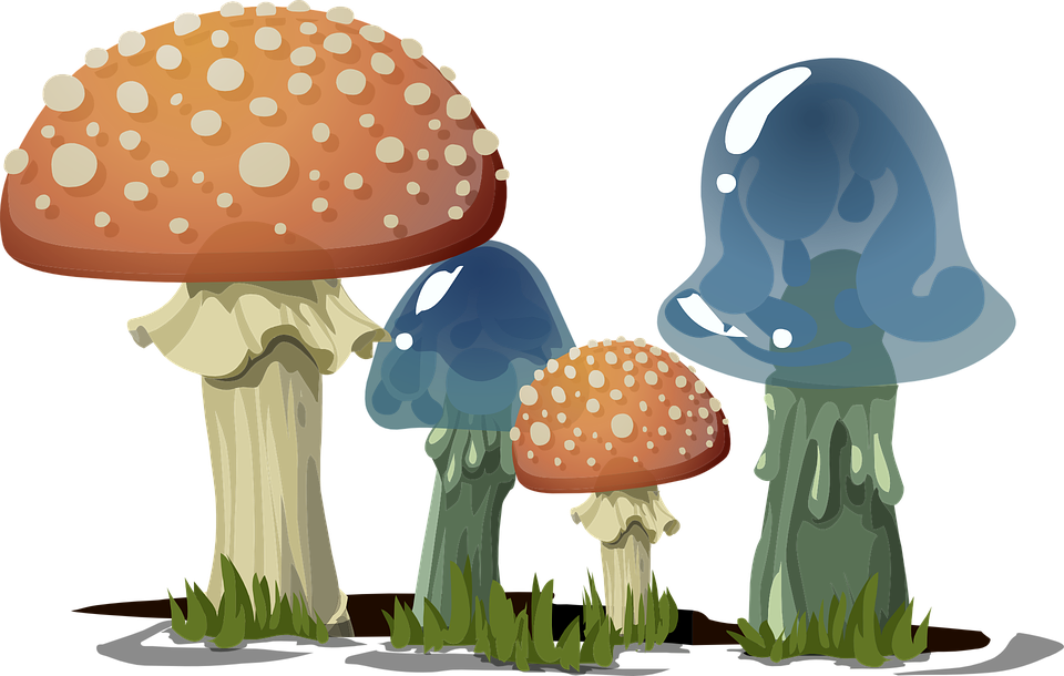 mushrooms toadstools fungi free vector graphic on pixabay rh pixabay com fungi clipart Caterpillar Clip Art