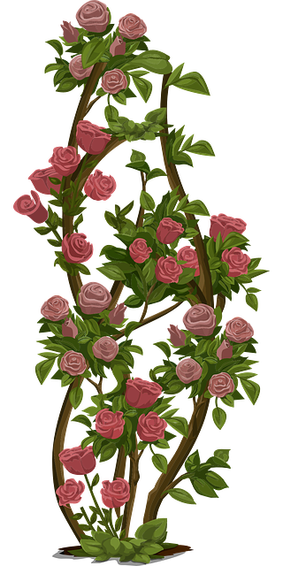 roses tree bush 183 free vector graphic on pixabay