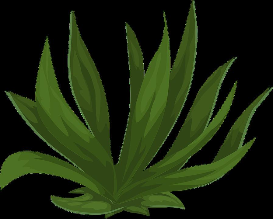 Gramin es vert plantes images vectorielles gratuites sur pixabay - Asiatische zimmerpflanzen ...