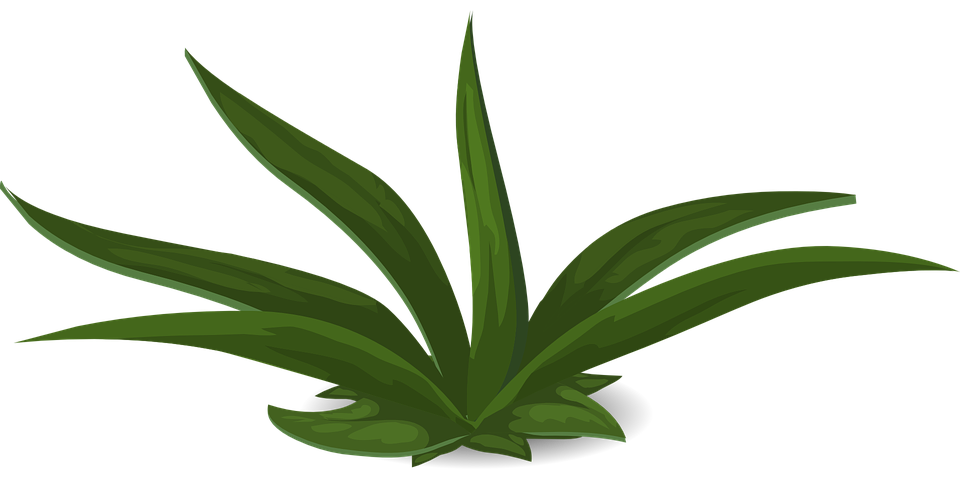 Grün Pflanzen Grünen Kostenlose Vektorgrafik Auf Pixabay