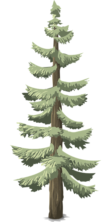 free vector graphic pines  conifer  trees  tall  woods free clipart mountain man free clipart mountain climber