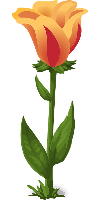 tulips plants flowers free vector graphic on pixabay