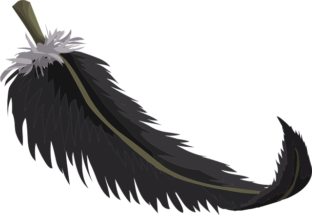 Black Feather Plumage · Free Vector Graphic On Pixabay