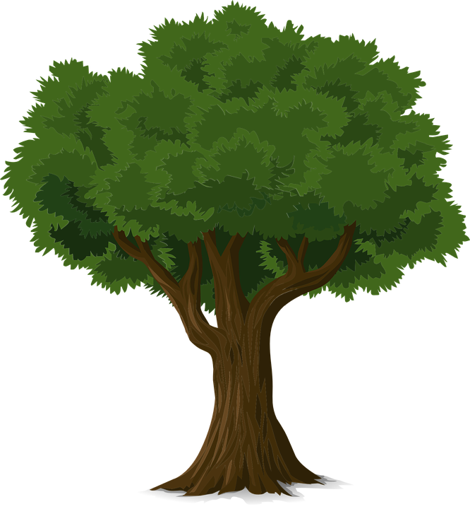 Free vector graphic Tree Forest Trunk Nature Leaves Free