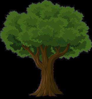 Baum, Wald, Stamm, Natur, Blätter