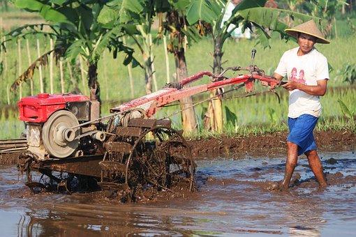 Farmer Field Plow Paddy Rural Nature Green