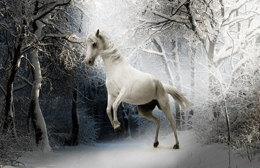 Animal, Horse, Nature, Mammal, White