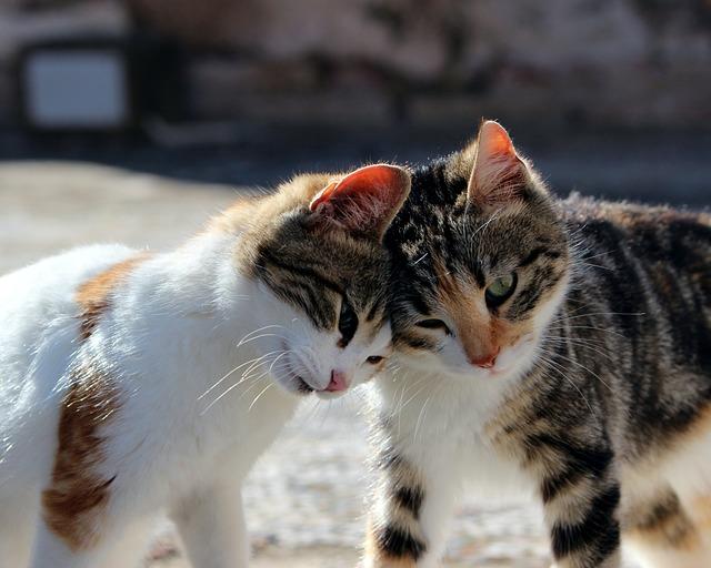 Free photo: Cat, Cuddl...