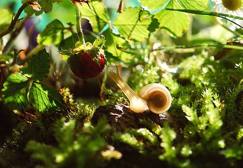 Snail, Animal, Nature, Shell, Mollusk