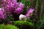 snail, shell, mollusk