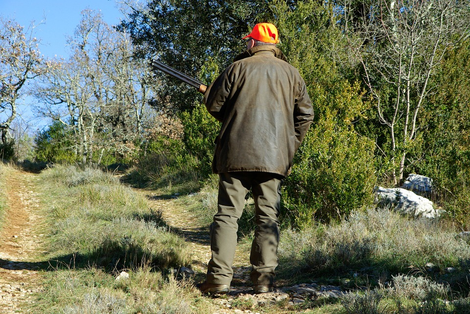 Chasse, Chasseur, Fusil, Maquis, Garrigue