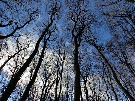 Forest, Sky, Winter, Landscape, Rügen