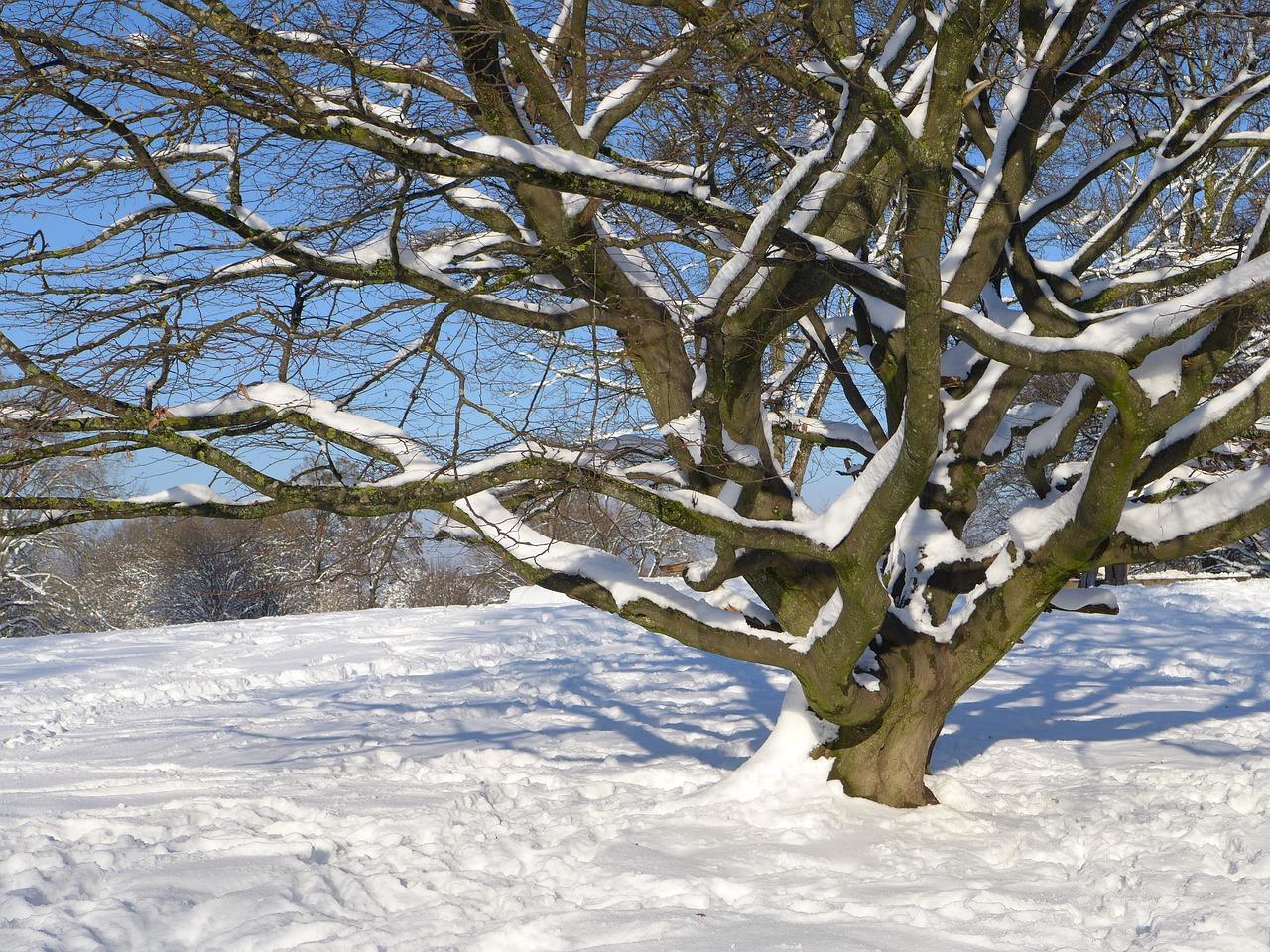 картинка дерево зимой без снега