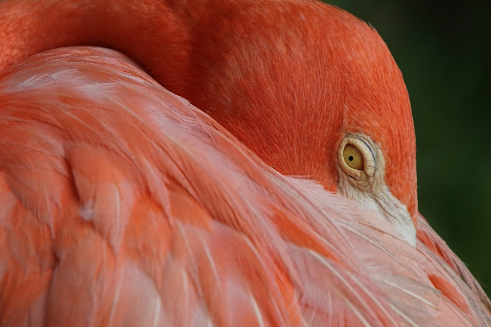 Free Photo Flamingo Bird Feather Plumage Free Image