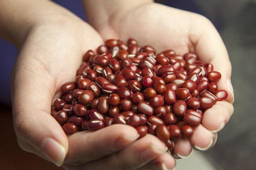 Red Beans, Hands, Corn Variety