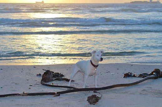 Hund, Strand, Spiel, Stöckchen