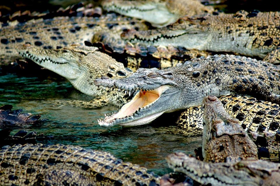 Bloß nicht rein fallen! Wer hier einen falschen Schritt macht ist in großer Gefahr. Durch einen Sumpf voller Aligatoren fahren ist ein Traum.