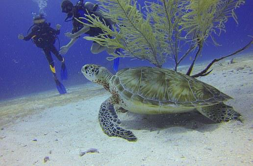 Turtle, Scuba Diving, Divers, Mexico