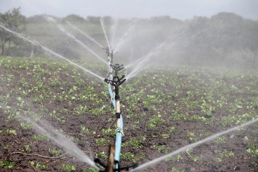 Irrigation, Agriculture, Sprinkling