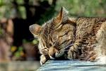 cat, sleeping, garden
