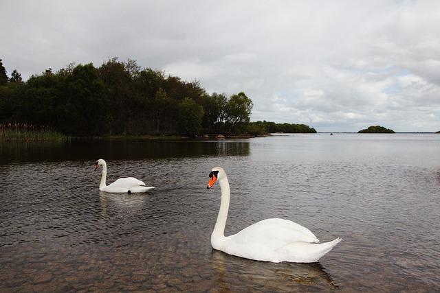 лодка лебедь озеро