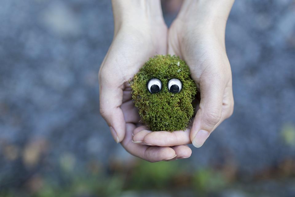 苔, 生態学, 環境, 保護, ライブ, 生活, 生きています, クリーチャー, 動物相, 手, 緑, 自然