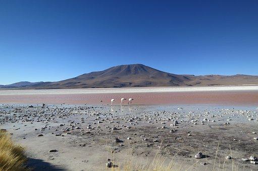 Atacama Desert, Chile, Flamingos