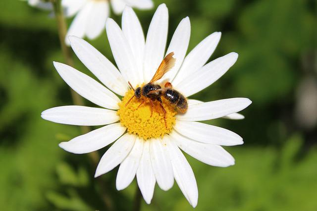 honey bees and flowers relationship counseling
