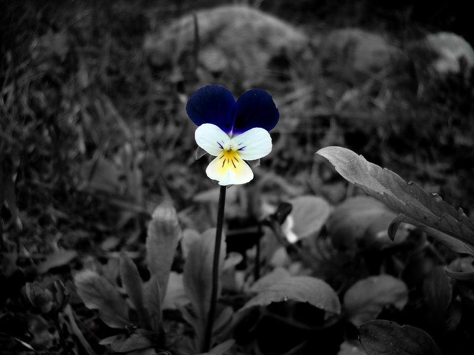 Flower black and white color accent floral nature