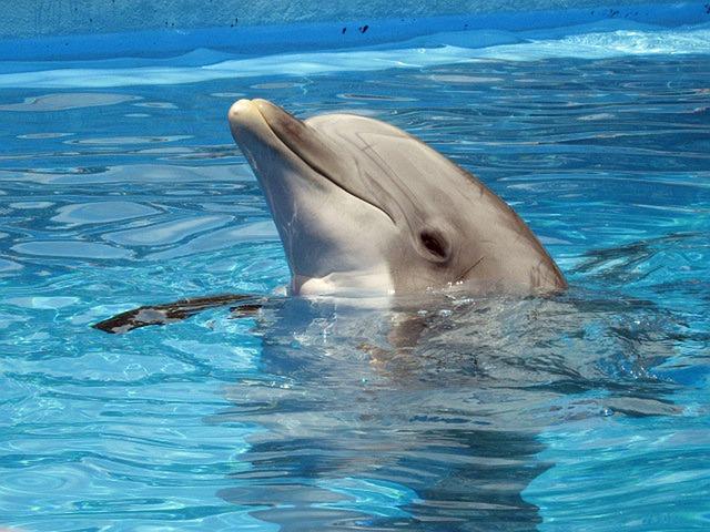 Dolphin mammal animal free photo on pixabay - Dauphin public swimming pool hours ...