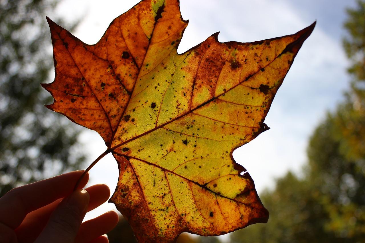 Картинки желтых листьев, наступающий новый год